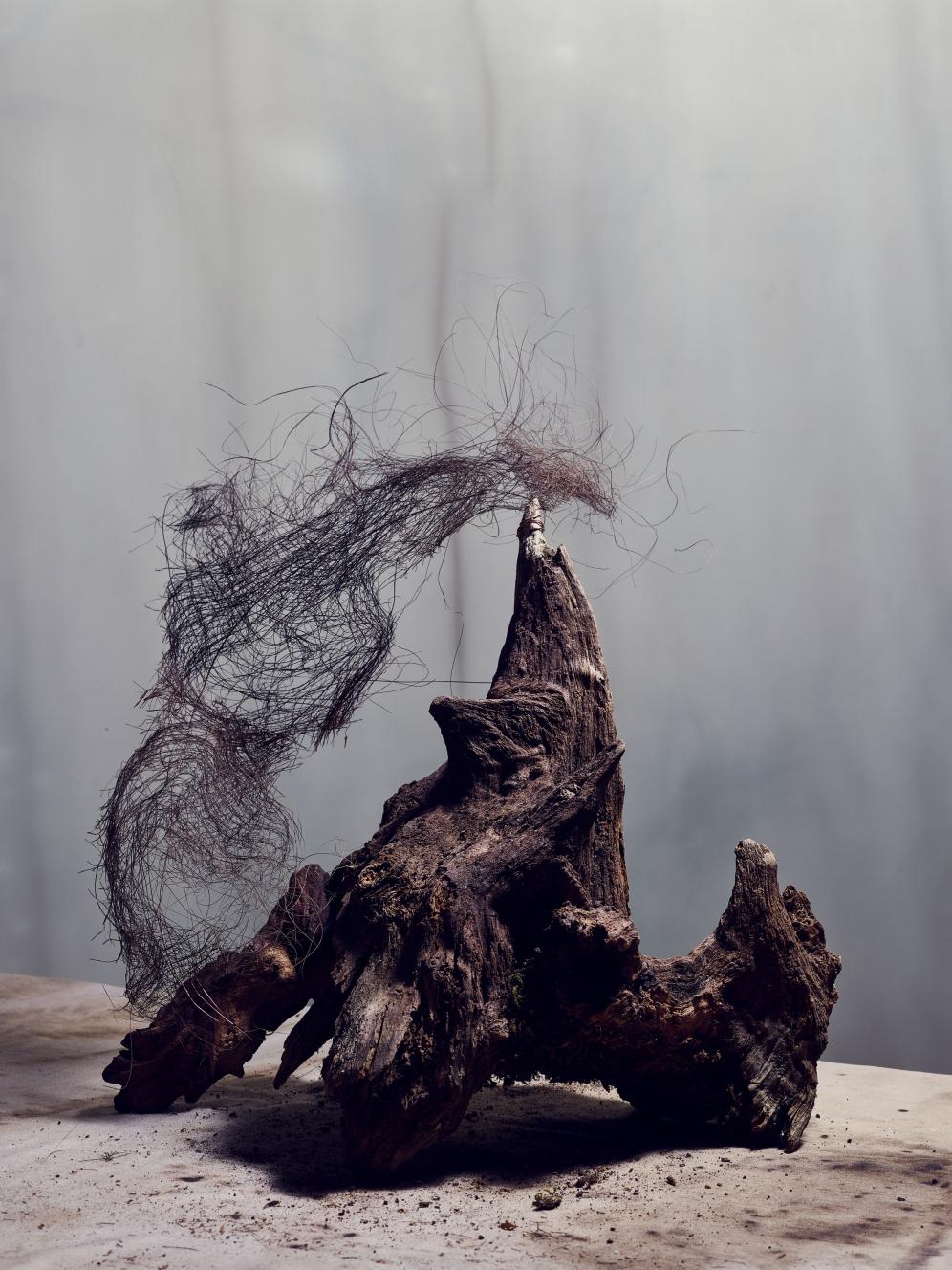Rakesprogress | Roots