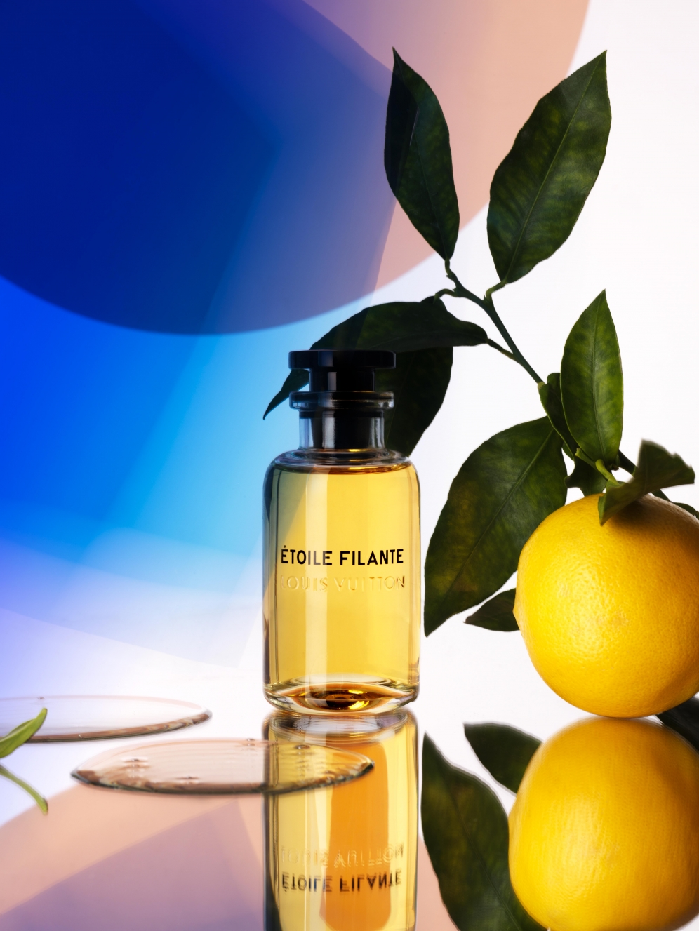 Fragrance | Wonderland